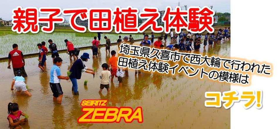 ゼブラ田植え体験実施(^^♪