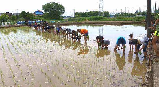1_riceplanting2018.jpg
