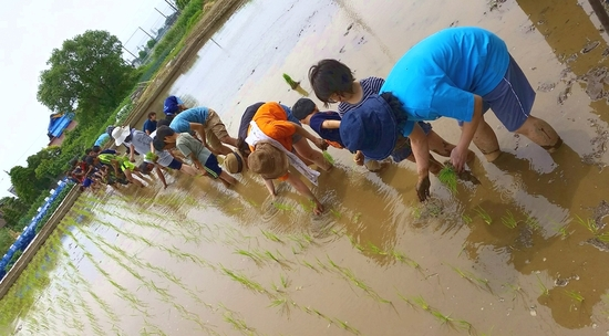 5_riceplanting2018.jpg
